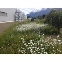 Blumenwiesen (10)