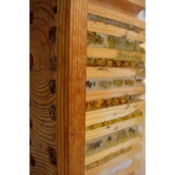 Wildbienen-Beobachtungskasten