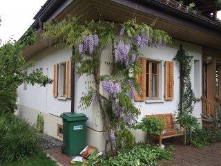 Fassadenbegrünung mit Wisneria