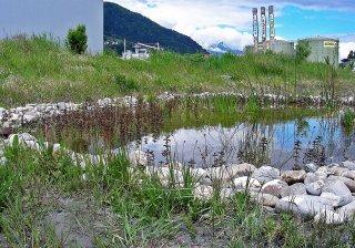 Naturnaher Teich Landquart 17.05.2017