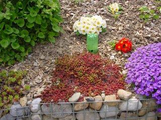Kleingitter-Korb bepflanzung mit Schneckenfalle