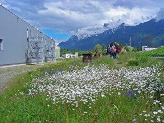Blumenwiese Landquart