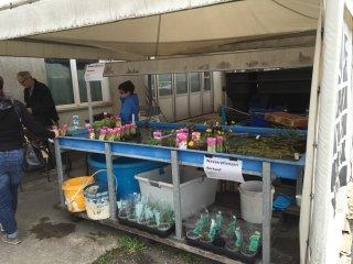 Wasserpflanzenverkaufsstand-an-Hausmessen.JPG